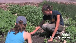 Added Value's Red Hook Community Farm