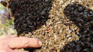 Состояние семей пчел на конец октября