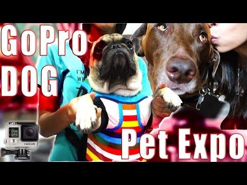 GoPro Dog  |  Pet Expo  |  Fun Agility Tricks