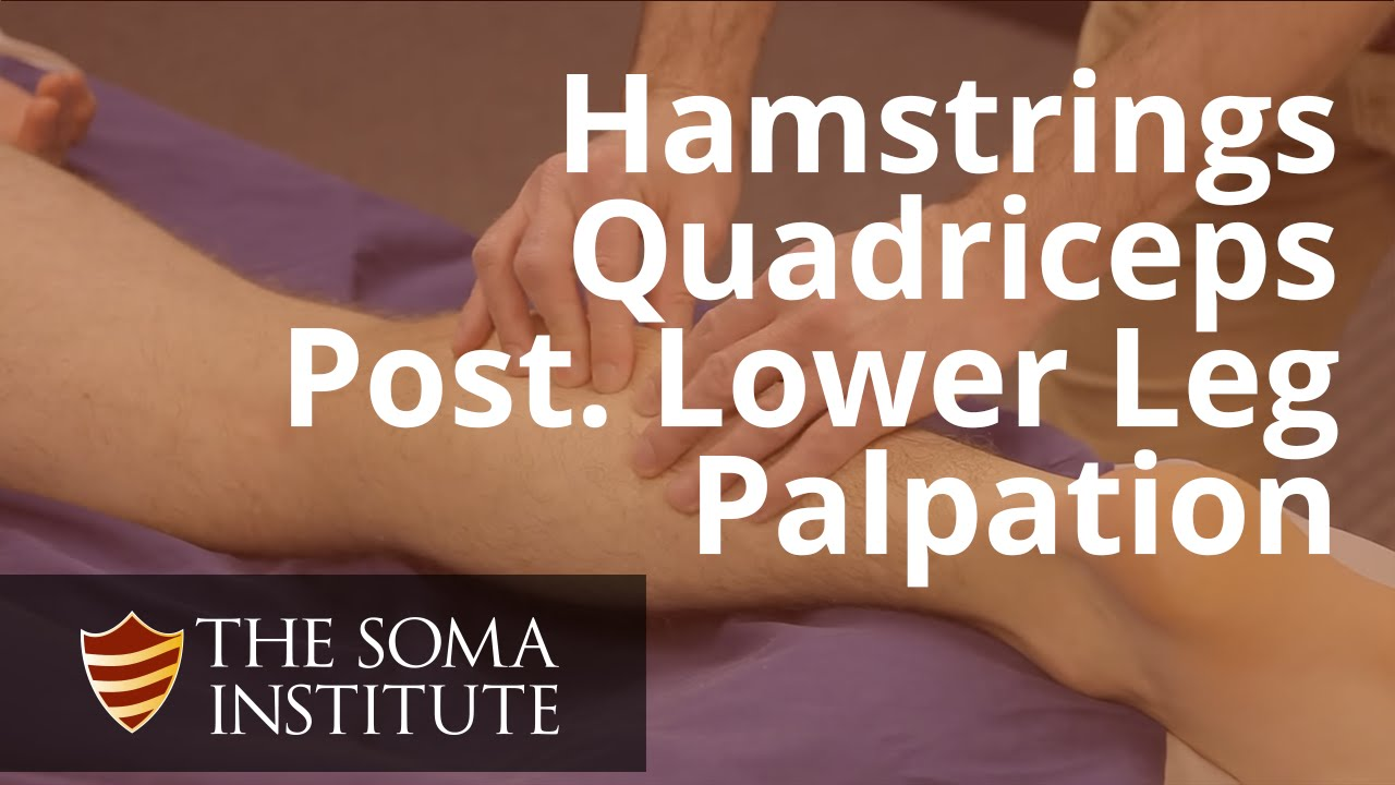 Palapation Of Hamstrings, Quadriceps And Posterior Lower