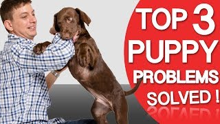 Top 3 Puppy Problems SOLVED! Biting, House Training & Chewing