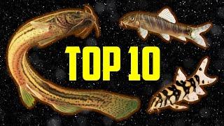 Top 10 Loaches for Your Aquarium