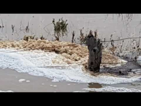 Flood Disaster! Mass Fish, Dolphin Die Off! Swan & Canning Rivers - Agricultural Chemical Run Off!