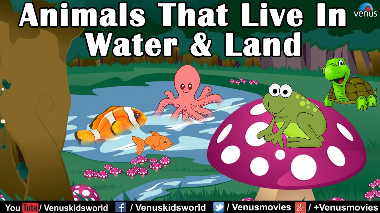 Animal Kingdom ~ Animals that live in Water & Land - YouTube