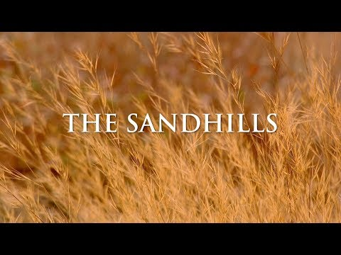 The Sandhills Of Georgia | Georgia Outdoors
