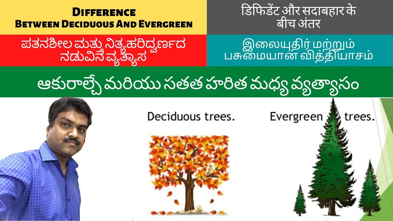 evergreen trees i different types of trees i different kinds of