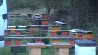 wylęgarnia matek pszczelich