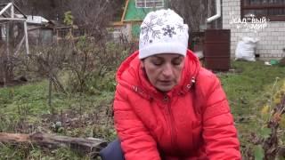 видео Хризантемы осенью: как приготовить цветы к зиме? #urozhainye_gryadki