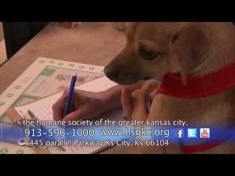 The Humane Society of Greater Kansas City - Univision Kansas City
