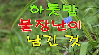 [불교로 세상 읽기] 하룻밤 불장난이 남긴 것. 한국문…