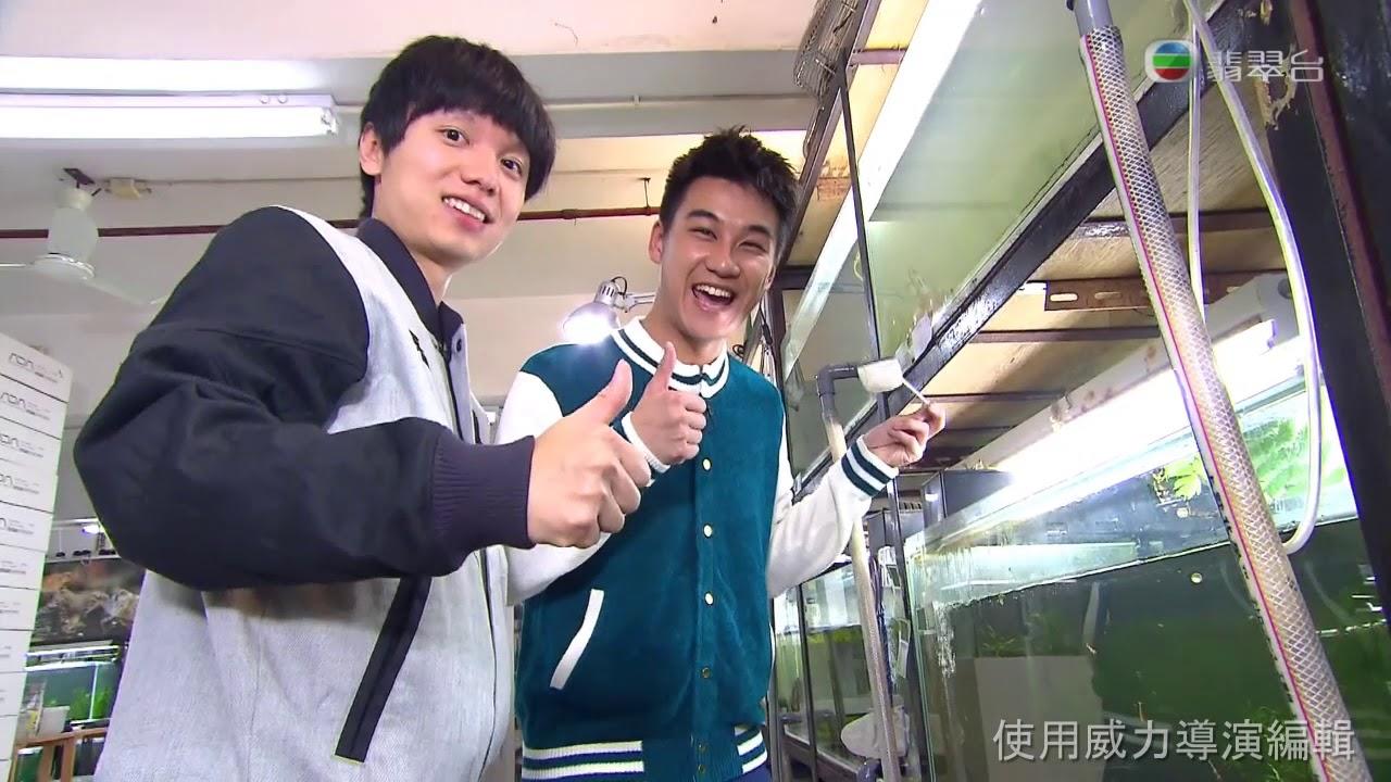 TVB 「Y Angle」華燈訪問:觀賞蝦介紹