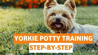 Yorkie Entrenamiento para ir al baño: guía para entrenar a los Yorkshire Terriers [PASO A PASO]...