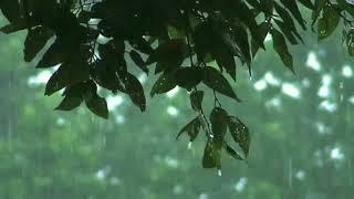เสียงฝนตก เพื่อการผ่อนคลาย นอนหลับ นาน 6 ชั่วโมง