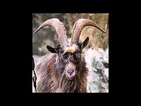 The Lowell Goat Chronicles