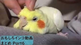 マークス メロディー 動画 雛