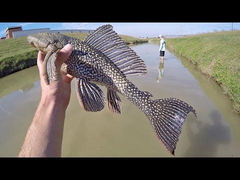 WEIRD Fish Caught By Hand!
