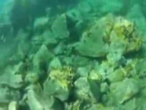 Vues sous marines aux Tobago Cays, archipel des Grenadines