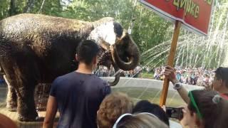 индийские слоны в челябинске