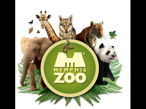 My Trip to Memphis Zoo