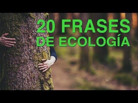120 Frases De Ecología Hacia Un Futuro Sostenible Con