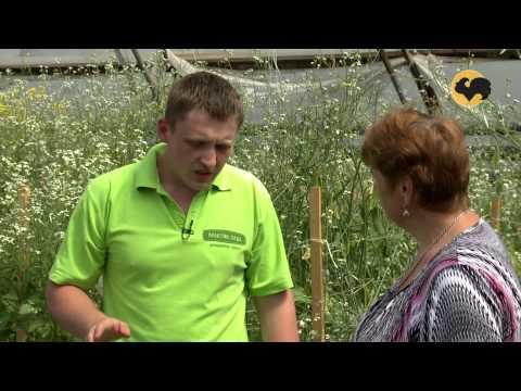 Сад и огород-116 Сорта капусты.