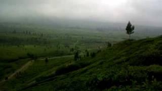 Kabut di Kebun Teh Pangalengan / Misty on Pangalengan Tea Plantation