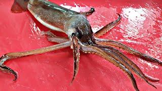 와이프가 좋아하는 오징어 회뜨기 산오징어회 squid …