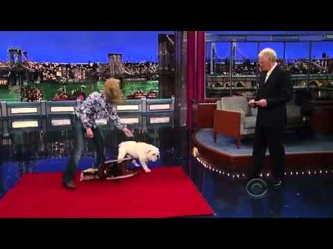 Bulldog on a Rocking Horse