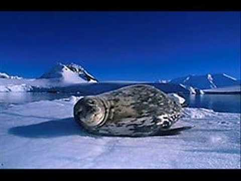 Hamradio from the Antarctica area.