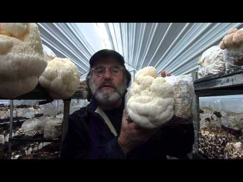 Paul Stamets with Lion's Mane