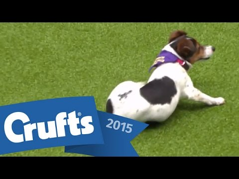 Thumbnail: Rescue Dog Agility | Crufts 2015