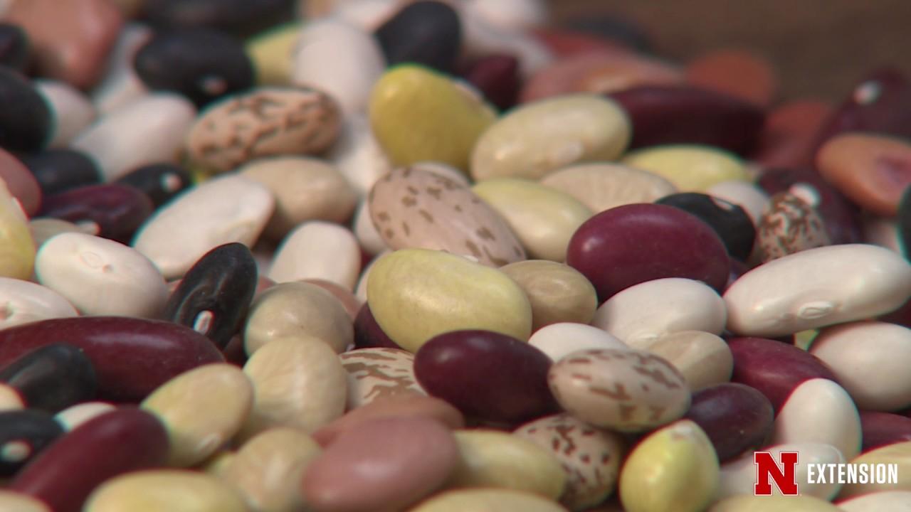 Garden Beans - YouTube