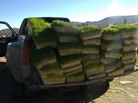 """Fodder Feed """"Biscuits"""" Loaded on the Truck Ready to Feed"""