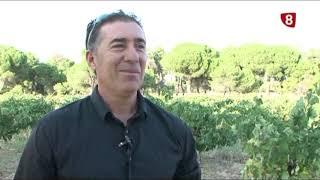 Vinos ecológicos Viña Alondra-Ávila Auténtica