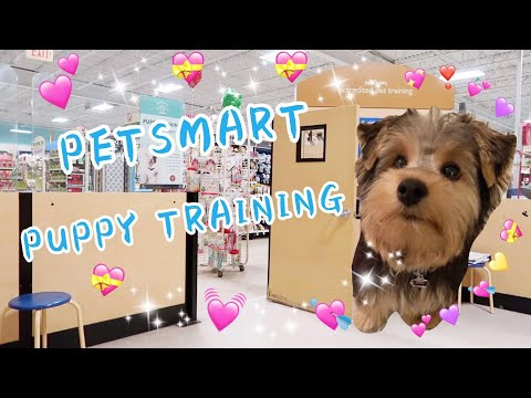 PetSmart Puppy Training/Dog Training/Yorkie/Yorkshire Terrier/How to Train a Puppy/Basic Cues