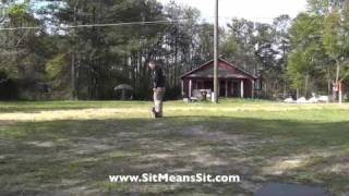 Off-leash Chihuahua Dog Training- Sit Means Sit Atlanta