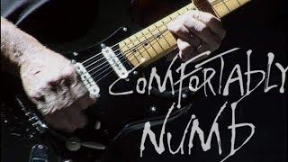 Dave Gilmour - Comfortably Numb Live Gdansk
