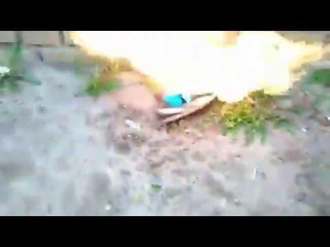 Кремация голубя ТНН