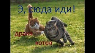 Драка котов / Такой кошачьей драки вы ещё не видели / Коты дерутся насмерть...