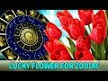 Your Lucky Flower based on your Zodiac Signs - Know Everything