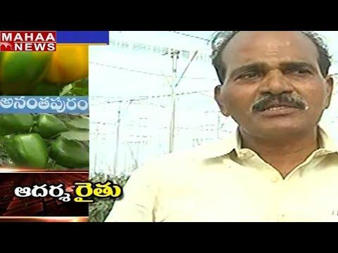 Success Of Capision Crop with Organic Process By Farmer Rama Krishna   Mahaa News Exclusive