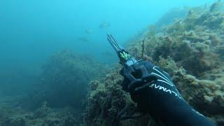 О таком выходе только мечтать 100 Подводная охота