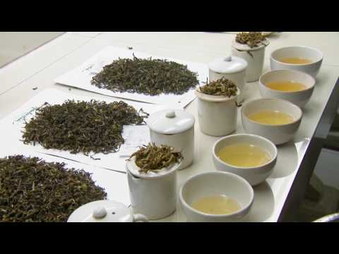 Darjeeling Organic Tea Estates Private Limited