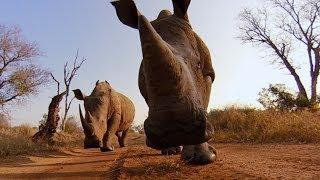 GoPro: Rhino Kiss