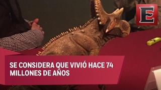 Paleontólogos presentan en Coahuila una nueva especie de dinosaurio