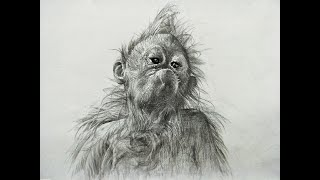monkey drawing realistic draw easy step pencil