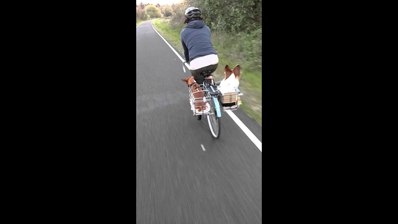 Dogs Riding In Bike Baskets Youtube
