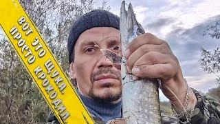 Ловля на Спиннинг с берега на реке Клязьма. Щуки просто атакуют.