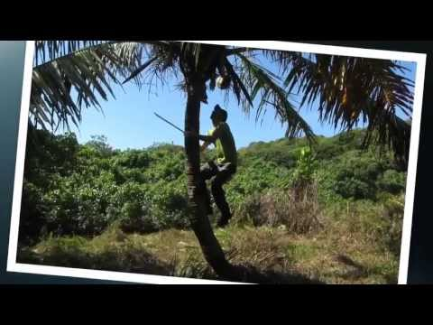 Tonga - království ostrovů