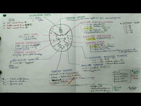 SKULL FORAMEN  ( CHART ) 💀💀 , part-1/5